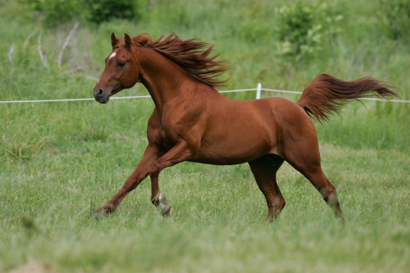 SENIOR STALLION: CAVU PARAGON